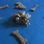 dog bones 2